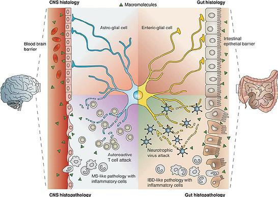 Gut-brain-disease.png