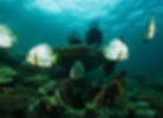 diving0207_nbl01.jpg