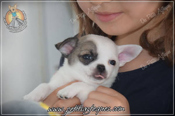 Chihuahua Des Petits Aztèques 415.JPG.jp