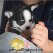 Chihuahua Des Petits Aztèques 478.JPG.jp