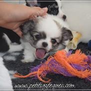 Chihuahua Des Petits Aztèques 209.JPG.jp
