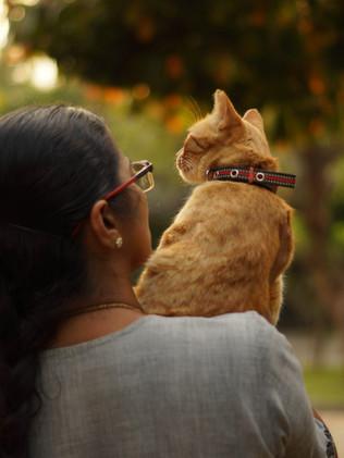 Cat Mom - Harini M.S.
