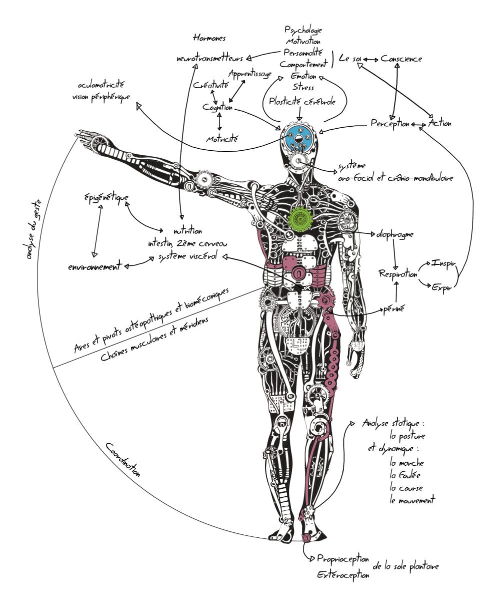 L' intelligence du corps, une machine humaine complexe et intelligente