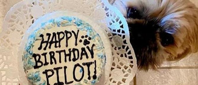Doggie Birthday Cake- Round 4 Inch