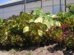 robinsucculentgreen