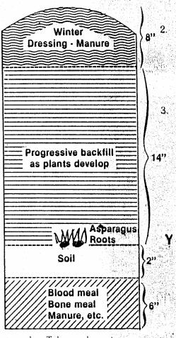 asparagusplantingguide.bmp