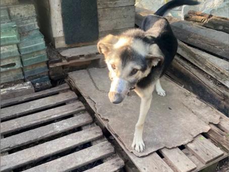 Волонтёры нашли новых хозяев собакам, которым заматывали морды скотчем