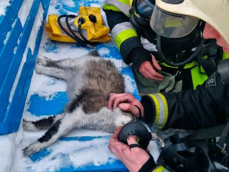В Кемерове спасатели реанимировали кошку после пожара