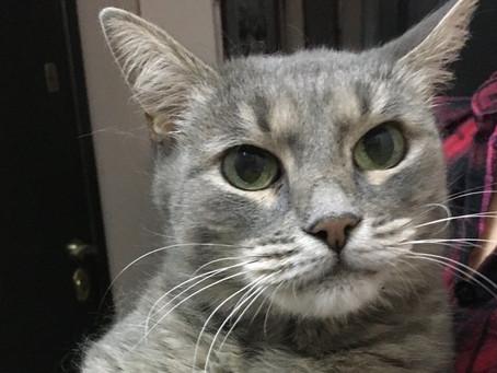 Коммунальщики из Москвы в морозы оставили кошку без дома