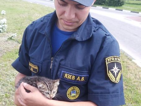 Спасатель изБелгорода забрал домой котёнка, попавшего вбеду