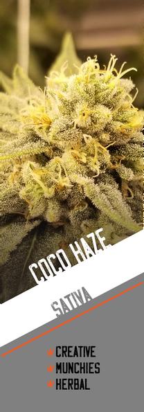 CoCo Haze
