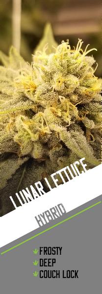 Lunar Lettuce