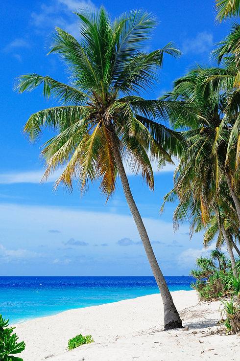 pexels-asad-photo-maldives-240526.jpg