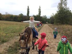 Ponyspaziergang auf den Feldern