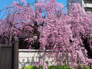 庚申参り開催中!(4月2日、3日)