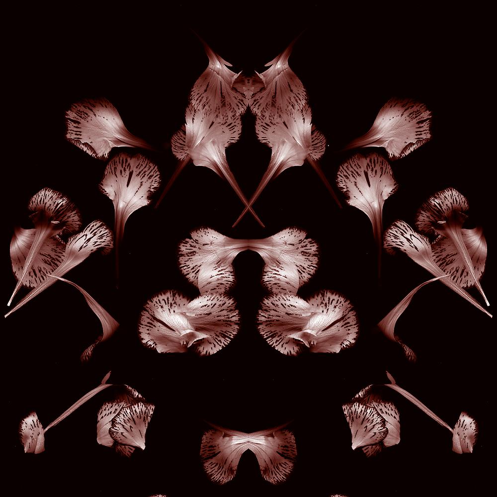 r-petals.png