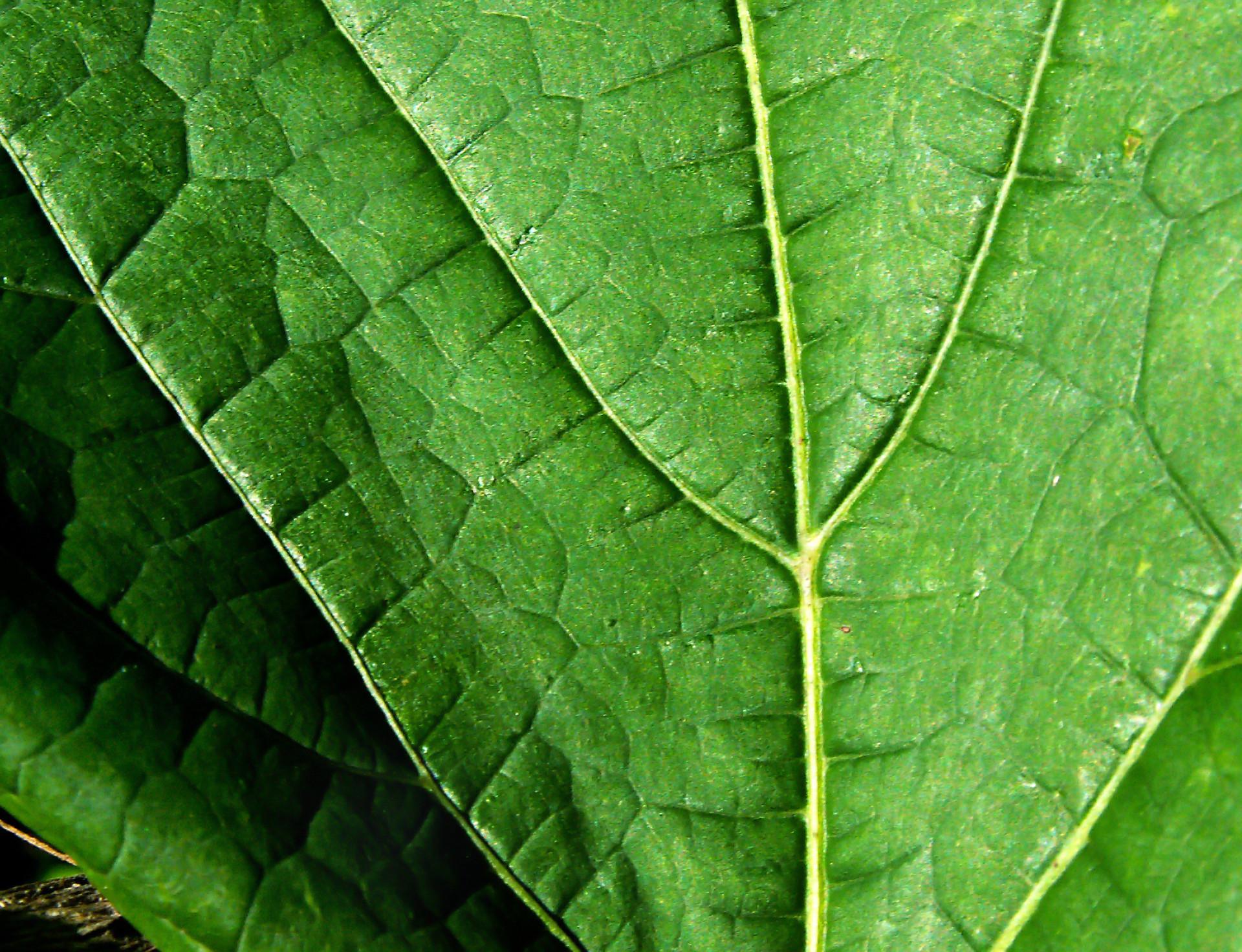 leaf-final.jpg