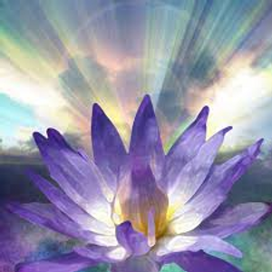 purple flower -2.png