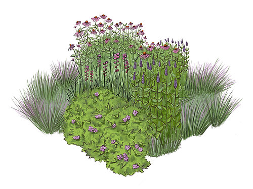 Purple Flower Garden Square   Native Plant Garden Design Plan Packet