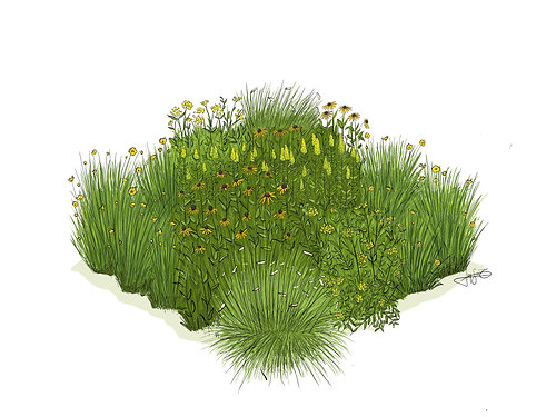 Yellow Flower Garden Square   Native Plant Garden Design Plan