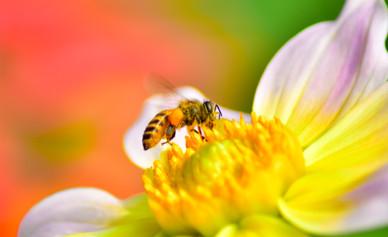 Bee5.jpg