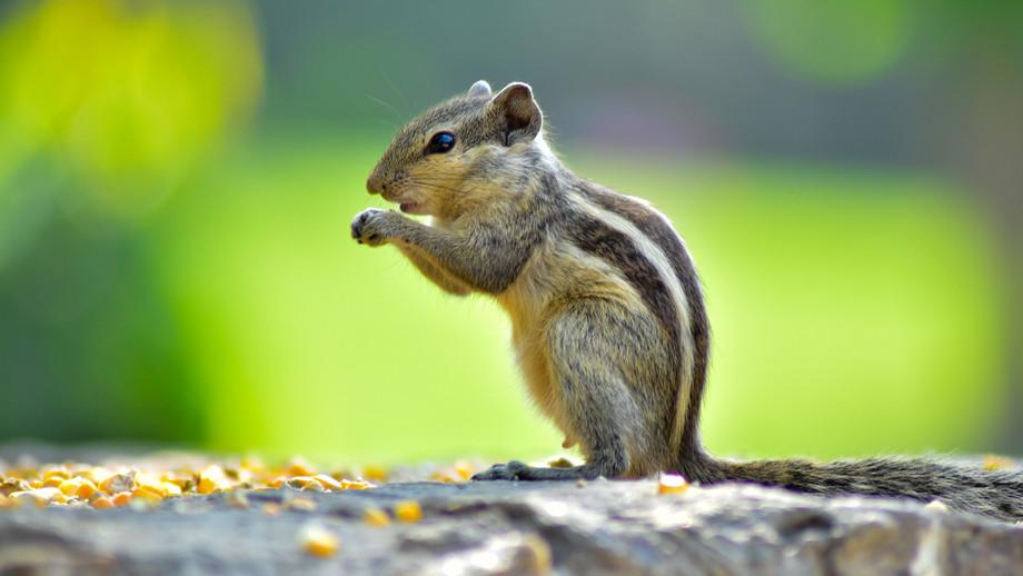 squirrel1.jpg