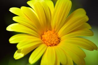 Flower 3