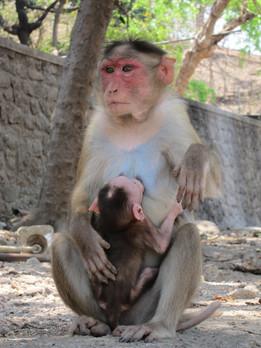 Nés pour aimer 2 / 2 – Biologie de l'attachement