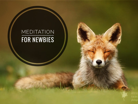 Meditation for Newbies - Week 1 - It's Easier than You Think