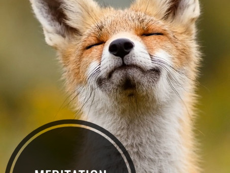 Meditation for Newbies - Week 2 - Slowing Down the Chatter