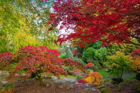 Johnston Gardens Aberdeen in the autumn