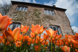 Tulips at Sissinghurst Gardens, Kent