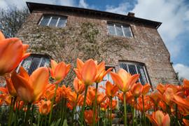Tulips at Sissinghurst Gardens, Kent
