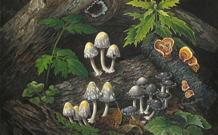 Sottobosco - Forest Floor 1_800_edited.jpg