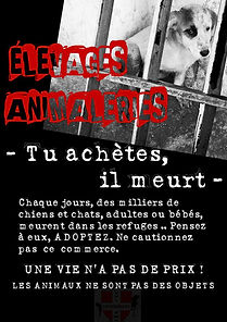 Elevage animaux, elevage de chats haute savoie, elevage de chiens haute savoie, elevage de chiens savoie, elevage de chats savoie, protection animale, abandon chat, abandon chien, SPA annecy, refuge pour animaux annecy, animalerie Annecy, acheter chat, acheter chien