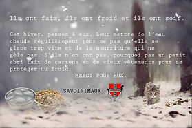 Chat hiver, chat errant, chat froid, sauver chat, don de chaton, chaton a donner, nourrir les chats, chat sauvage, protection animale savoie, protection animale haute savoie, SPA, refuge pour animaux