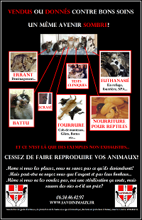 Chaton a donner, don chaton, stérilisation chatte, protection animale, animaux haute-savoie, fourrure chat, chat écrasé, chat errant, chat maltraité, chat battu, refuge pour animaux, SPA, association de protection animale