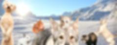 Adoption d'Animaux en Savoie et Haute-savoie, Savoinimaux