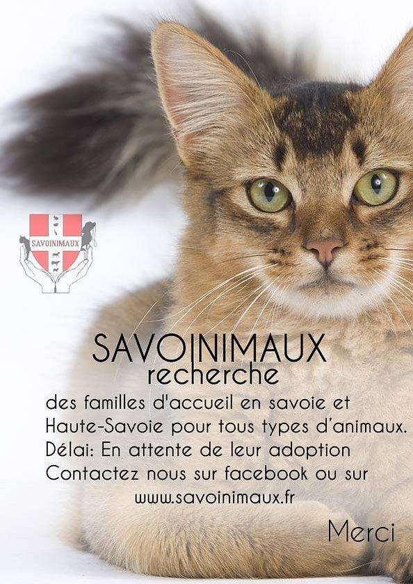 sauver chaton, accueillir animal, famille d'accueil animaux, chat errant, aider animaux, collectes pour animaux, chien, chat, chaton a donner