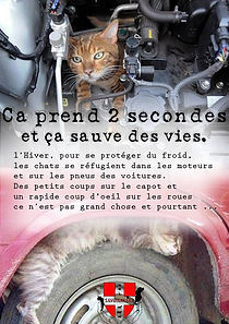 Chat hiver, chat errant, chat froid, sauver chat, don de chaton, chaton a donner, nourrir les chats, chat sauvage, protection animale savoie, protection animale haute savoie, SPA, refuge pour animaux, chat moteur de voiture, chat roue, chat écrasé