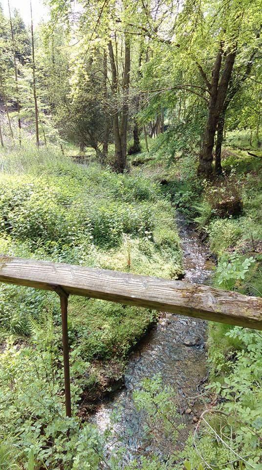 Cranham mindfulness walk stream