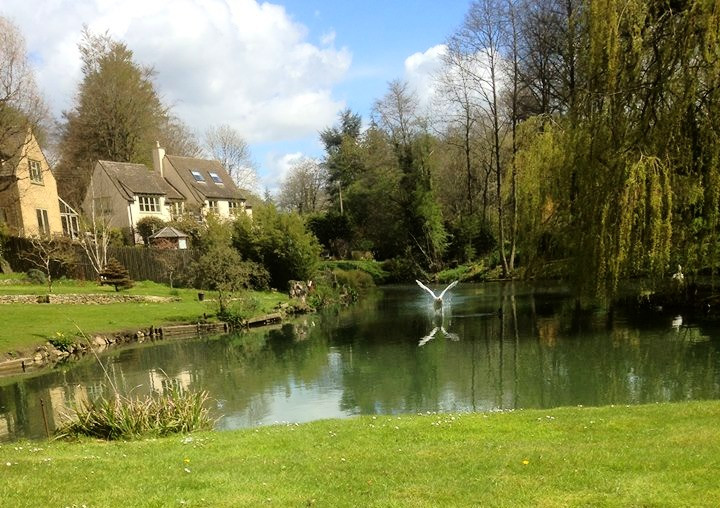 swan lake painswick natural mindfulness walk