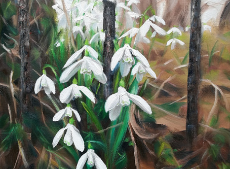 Snowdrop prints & greeting cards at Painswick Rococo Garden - Art Contest until 9th Feb!