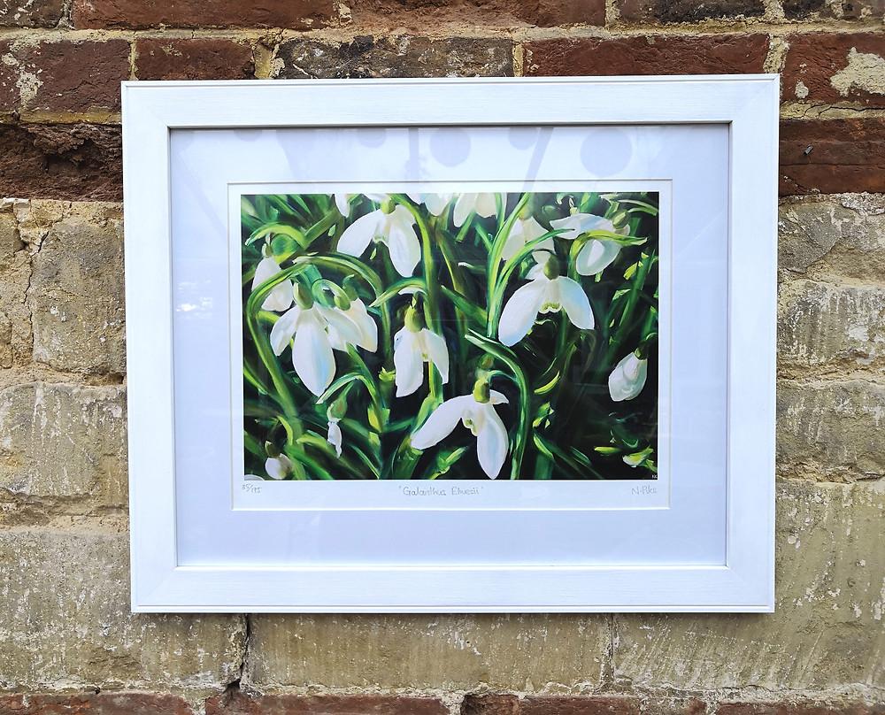 Framed limited edition snowdrop art print painswick rococo garden