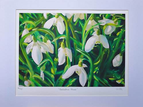 'Galanthus Elwesii' snowdrops limited edition print