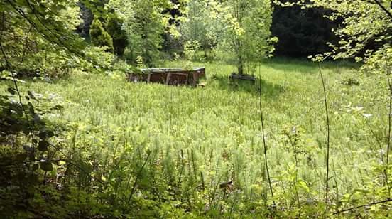 Cranham ferns mindfulness walk