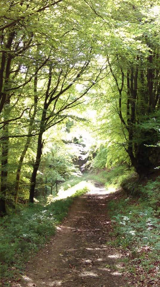 Cranham mindfulness walk
