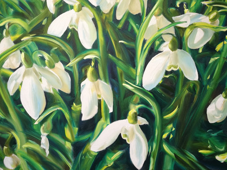 New snowdrop paintings at Painswick Rococo Garden by Cotswold artist Nick Pike
