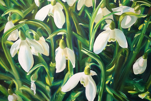'Galanthus Elwesii' Greeting Card