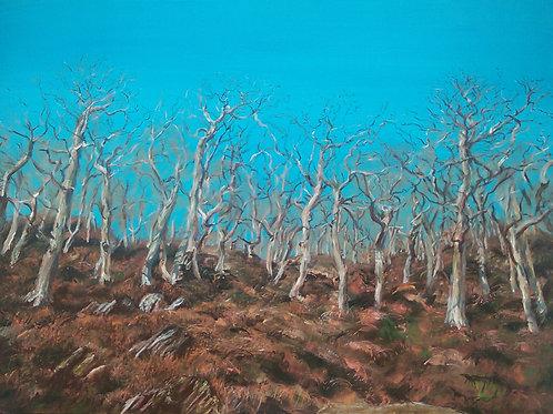 'Forgotten Forest'